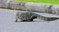 Clouded monitor lizard crawls around street, Lumphini park, Bangkok Stock Footage