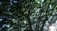 Tropical forest in the Waimea Falls Park on Oahu, Hawaii - stock footage