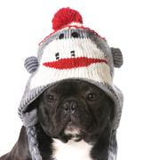 Dog wearing hat Stock Photos