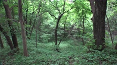 Dense Deciduous Hardwood Forest Along Missouri River Stock Footage