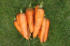 Washed carrots without tops from a garden-bed on a green grass - stock photo