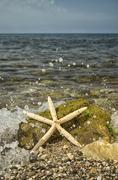 Stock Photo of starfish on the beach