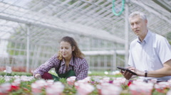 Team of workers in the agricultural industry working in large nursery greenhouse Stock Footage