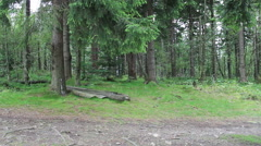 In the wild forest. Karkonosze National Park Stock Footage