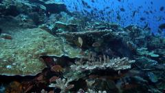 Coral reef ecosystem alive with reef fish - stock footage