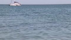 Dolphins at Monkey Mia reserve, Shark Bay National park, Western Australia Stock Footage