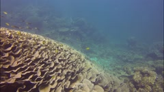 Diving at coral bay, Australia Stock Footage