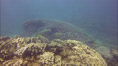 Diving with sharks at coral bay, Australia - stock footage