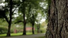 Tree avenue, focus shift Stock Footage
