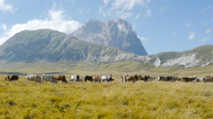 Ranch animals in green field with mountains in the background Stock Footage