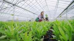 Workers in agriculture and science industry checking the plants in large nursery - stock footage