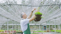 Portrait of happy smiling manager or worker in a large plant nursery greenhouse - stock footage