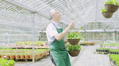 Portrait of happy smiling manager or worker in a large plant nursery greenhouse Stock Footage