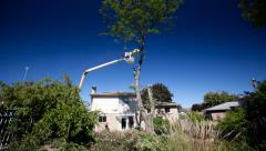 4K UltraHD A timelapse of workmen cutting down a tree - stock footage