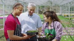 Workers in the agricultural industry checking the plants in a large greenhouse - stock footage
