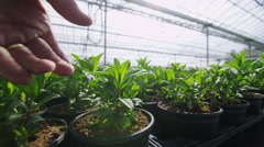 Hand touching young plants in large greenhouse. Agriculture or science industry - stock footage