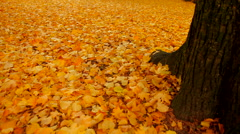 Park is full of yellow leafs - stock footage