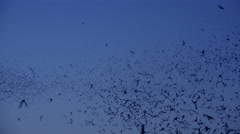4K Bat Sky Swarm Stock Footage