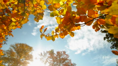 Yellow leafs and blue sky - stock footage