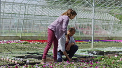 Attractive couple looking at plants in large commercial plant nursery - stock footage
