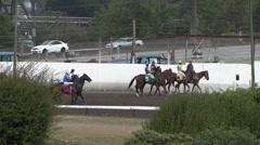 Bred Horse Race Derby - 62 Stock Footage