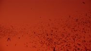 Stock Video Footage of 4K Thousands Of Bats Fly Through Sky At Sunset