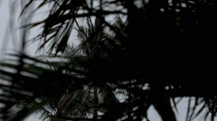 Stock Video Footage of Rainy Season in the Tropical Region. Palm Tree in Wind.