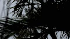 Rainy Season in the Tropical Region. Palm Tree in Wind. - stock footage