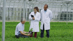 Workers in agriculture and science industry checking the plants in large nursery Stock Footage