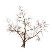 Leafless tree Stock Photos