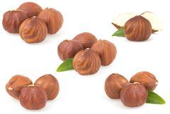Hazelnut nut on white Stock Photos