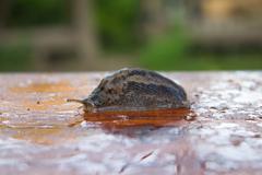 snail on wood - stock photo
