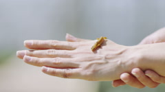 Stock Video Footage of Small yellow lizard crawling across an outstretched hand.