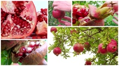 Pomegranate montage Stock Footage