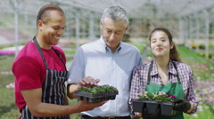 Portrait of happy smiling team of workers in large plant nursery greenhouse - stock footage