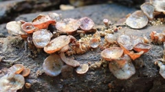 Fungus grows on trees Stock Footage