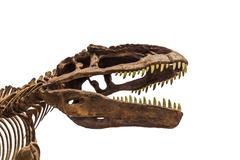 dinosaur fossil - stock photo