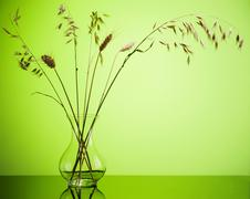 Bunch of wheat spikes in vase on green background Stock Photos