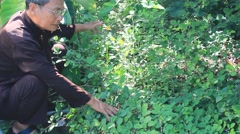 The medicine man picking medicinal herbs on the mountain, Asia Stock Footage