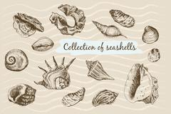 Seashells - stock illustration