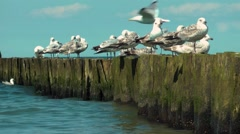 Seagulls watching the sea Möwen an der Ostsee Stock Footage