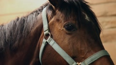 Young girl tacking up a horse for riding Stock Footage