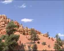 DIXIE NATIONAL FOREST  pine trees growing on eroded red limestone cliff Stock Footage