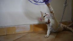 Cat playing at home Stock Footage