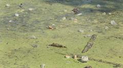 Lake waste debris dirty bottles glass, Pocket, plastic Stock Footage