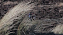 Walking dogs through Winterton dunes in Norfolk Stock Footage