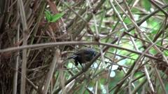 ULTRA HD 4K Small bird enjoy clean plumage hanging tree branch outdoor garden  Stock Footage