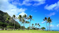 Palm trees in Kualoa Park, on Oahu, Hawaii, USA. Stock Footage