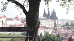 Bench in front of tree overlooking city Stock Footage