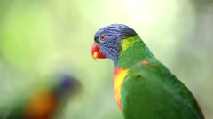Rainbow Lorikeet Opening Mouth, Colourful Bird - Close Up Stock Footage